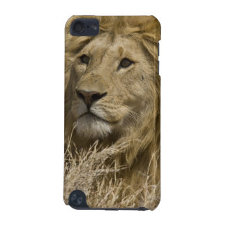 African Lion, Panthera leo, Portrait of a iPod Touch (5th Generation) Covers