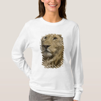 African Lion, Panthera leo, Portrait of a T-Shirt