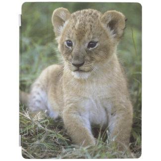 African lion, Panthera leo), Tanzania, iPad Cover