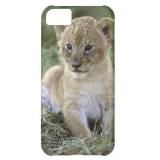 African lion, Panthera leo), Tanzania, iPhone 5C Case