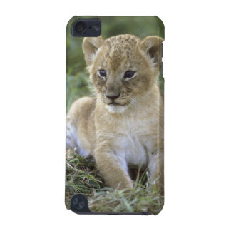African lion, Panthera leo), Tanzania, iPod Touch (5th Generation) Case