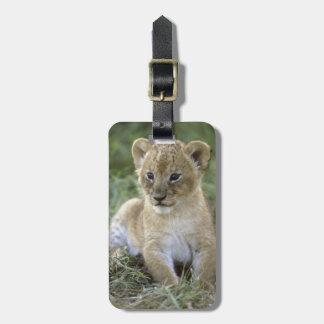 African lion, Panthera leo), Tanzania, Luggage Tag