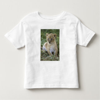 African lion, Panthera leo), Tanzania, Toddler T-Shirt