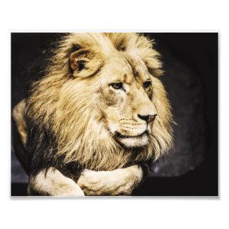 African Lion Photo Art