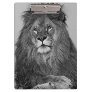 African Lion resting on rock cliff Clipboard