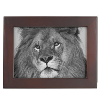 African Lion resting on rock cliff Keepsake Box