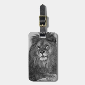 African Lion resting on rock cliff Luggage Tag