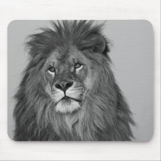 African Lion resting on rock cliff Mouse Mat