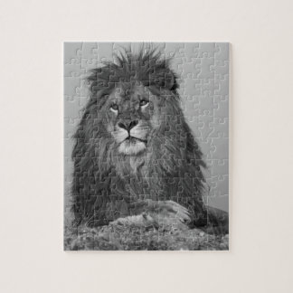 African Lion resting on rock cliff Puzzles