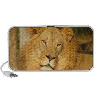 African Lion Speaker