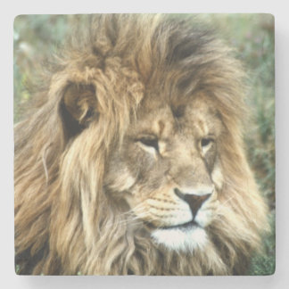 African lion stone coaster