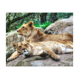 African Lioness Canvas Print