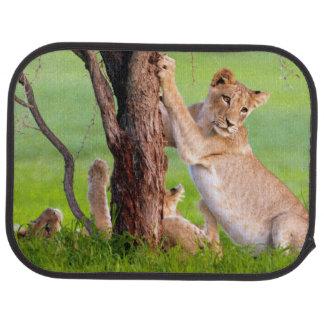 African Lions Kgalagadi Car Mat