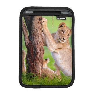 African Lions Kgalagadi iPad Mini Sleeve