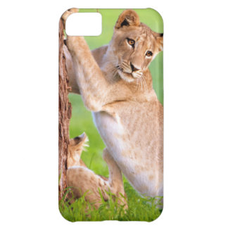 African Lions Kgalagadi iPhone 5C Case