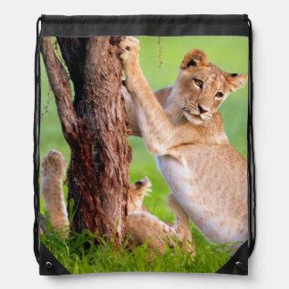 African Lions Kgalagadi Backpacks