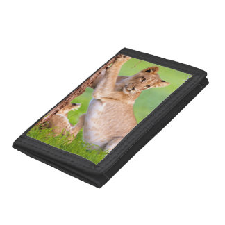 African Lions Kgalagadi Tri-fold Wallet
