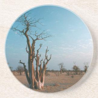 African Moringo Tree On Plain, Etosha National Sandstone Coaster