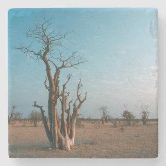 African Moringo Tree On Plain, Etosha National Stone Coaster