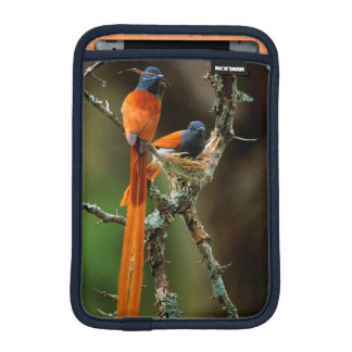 African Paradise Flycatcher 2 iPad Mini Sleeve