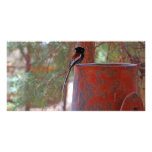 African Paradise Flycatcher Photo Greeting Card