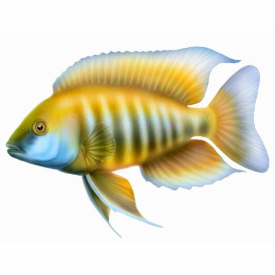 African Peacock Cichlid Holiday Ornament Photo Sculpture