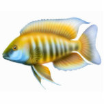 African Peacock Cichlid Holiday Ornament Photo Sculpture Decoration