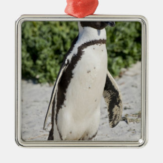 African Penguin, formerly known as Jackass Christmas Ornament