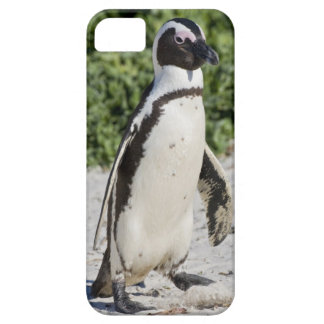 African Penguin, formerly known as Jackass iPhone 5 Cases