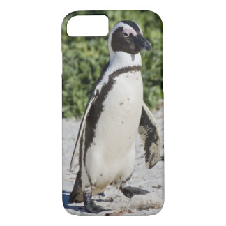 African Penguin, formerly known as Jackass iPhone 8/7 Case