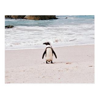 African Penguin Postcard