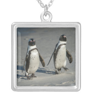 African penguin (Spheniscus demersus)2 Silver Plated Necklace