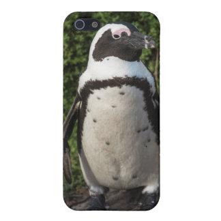 African penguin (Spheniscus demersus) 4 iPhone 5/5S Covers