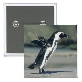 African Penguin, (Spheniscus demersus), coming 15 Cm Square Badge