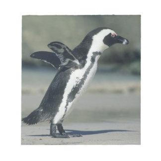 African Penguin, (Spheniscus demersus), coming Notepad
