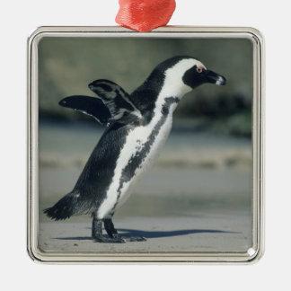 African Penguin, (Spheniscus demersus), coming Silver-Colored Square Decoration