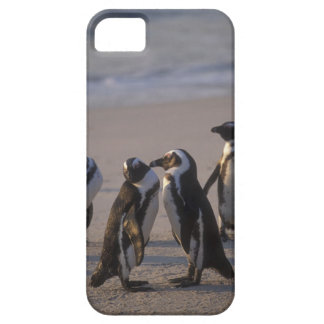 African Penguin (Spheniscus demersus) or Jackass 2 Case For The iPhone 5
