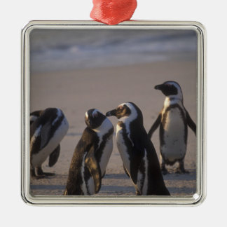 African Penguin (Spheniscus demersus) or Jackass 2 Silver-Colored Square Decoration
