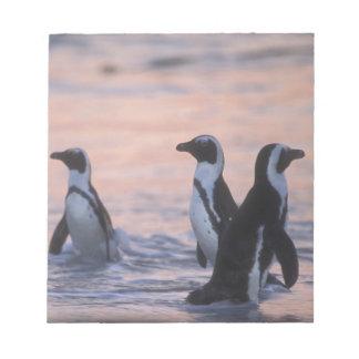 African Penguin (Spheniscus demersus) or Jackass 3 Notepad
