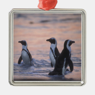 African Penguin (Spheniscus demersus) or Jackass 3 Silver-Colored Square Decoration