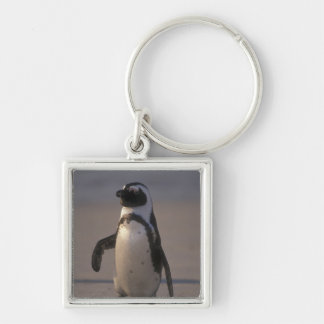 African Penguin (Spheniscus demersus) or Jackass Key Ring