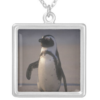 African Penguin (Spheniscus demersus) or Jackass Silver Plated Necklace