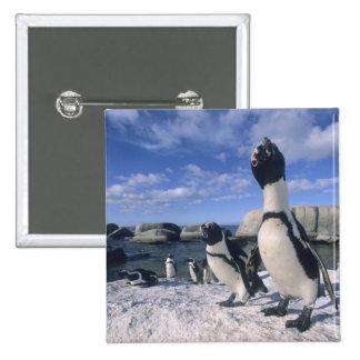 African Penguin ((Spheniscus demersus) wild, 15 Cm Square Badge