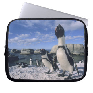 African Penguin ((Spheniscus demersus) wild, Laptop Sleeve