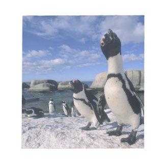 African Penguin ((Spheniscus demersus) wild, Notepad