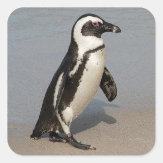 African Penguin Walking Square Sticker
