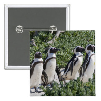 African Penguins, formerly known as Jackass 15 Cm Square Badge