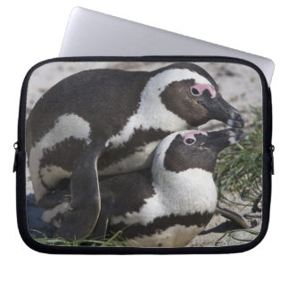 African Penguins, formerly known as Jackass 2 Laptop Sleeve
