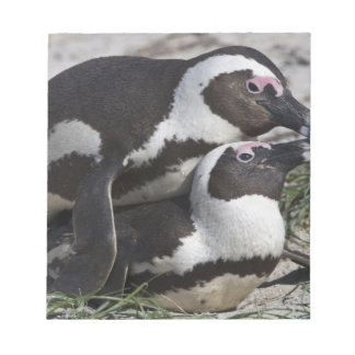 African Penguins, formerly known as Jackass 2 Notepad