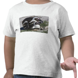 African Penguins, formerly known as Jackass 2 Tshirt